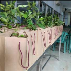 Plant saplings