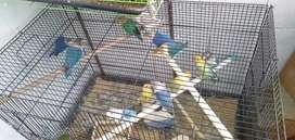 Lovebird lb love bird