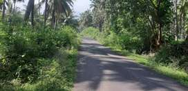Animali near coconut farm land sales