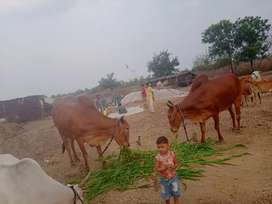 Bhugaon post selu kate