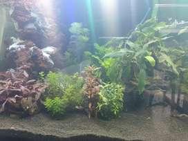 Aquarium and acessories