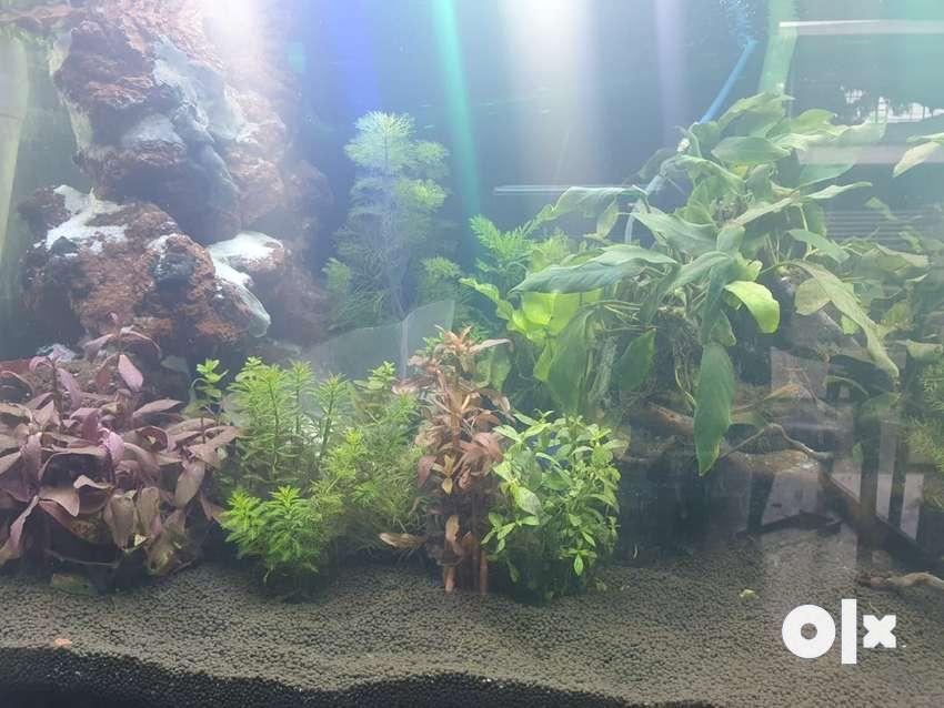 Aquarium and acessories 0