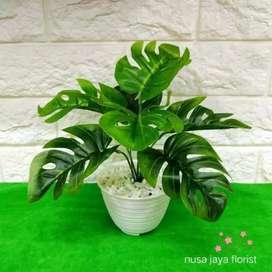 Rangkaian daun janda bolong  daun plastik mempercantik ruangan