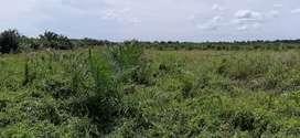 Tanah beserta sawit 100 × 400 dijual atau barter mobil