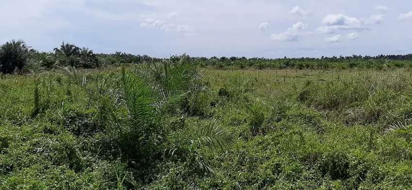 Tanah beserta sawit 100 × 400 dijual atau barter mobil 0