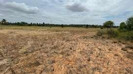 Agriculture land/agricultural land/land/coconut farm