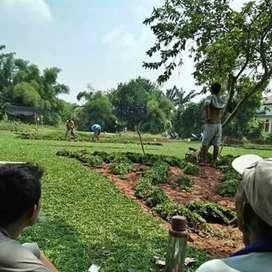 Tukan rumput hias untuk daerah mamuju dan sekitarnya