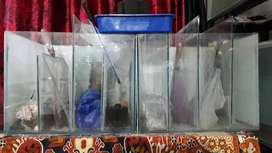 Fish tank for flowerhorn partition tank