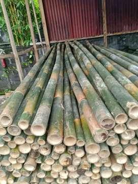 Bambu steger 7.000/btg