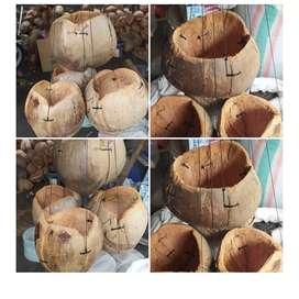 pot kelapa gantung original