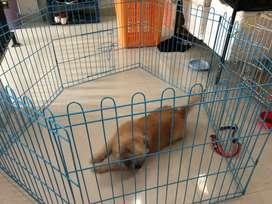 kandang anjing atau kucing