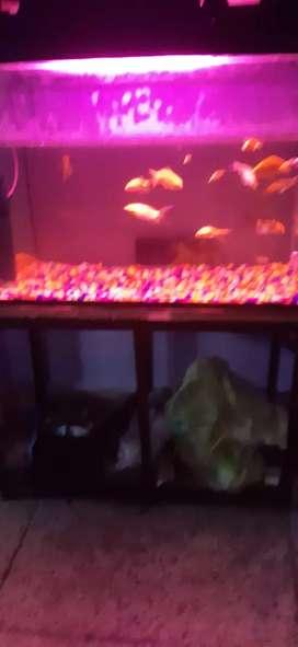 Marine/freshwater aquarium