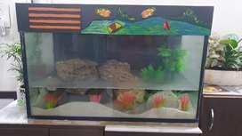 Small and big Fish tank