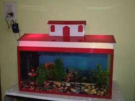 Wonder looking aquarium