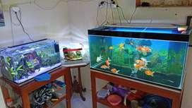 Di jual aquarium komplit + ikannya