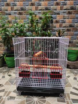 Cage of birds new