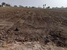 One Gunta-Farming land with Monthly Income @Sadasivpet