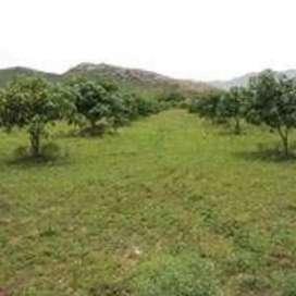 20000 sqft farm plot for sale, rs 15 lac on khopoli pali road