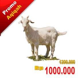 Promo Kambing Aqiqah Palembang