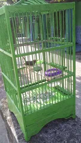 Burung prenjak lancur gacor