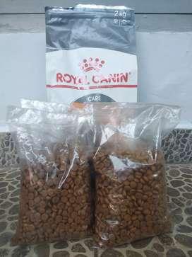 jual makanan kucing dry food/pur/kering