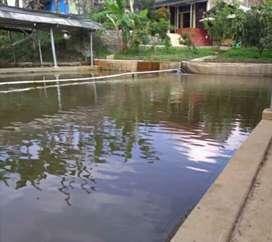 Jual Rmh + kolam ikan 48 tmbk
