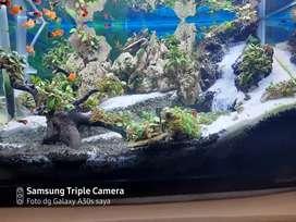 Aquarium/aquascape