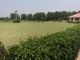 Farm House Land For Sale On Bedian Road Lahore 33Lac/Kanal At IVY-FARM