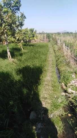 Batudawa Tanah Sawah Cocok Untuk Kavling dan Perumahan