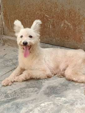 i want to sell my dog female