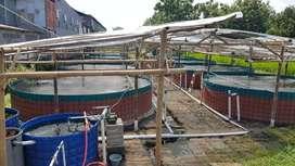 Diameter Dua Meter Kolam Terpal dan HDPE Bundar
