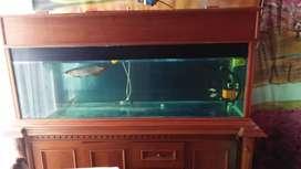 Ass.jual aquarium fullsett + kabinet+ arwana
