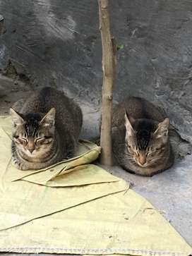 twins cats