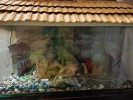 Fishes tank