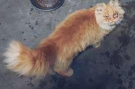 6 mahine ki cat male female donon