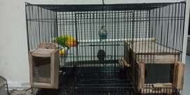 Di jual burung lovebird full set