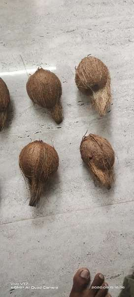 Cocunt broom stick and coconut  wholesale and retail