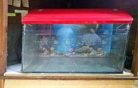 Fish Tank  with Oxygen Machine