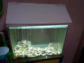 Add some live to your room with a medium size Fish Tank