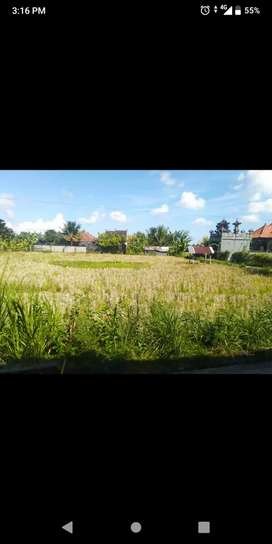 Dijual Tanah 5 Are di daerah Selat, Klungkung 1,25 M (Nego)