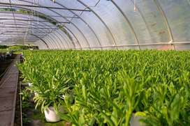 Harga Miring ! Plastik UV VATAN Greenhouse Berkualitas Terbaik