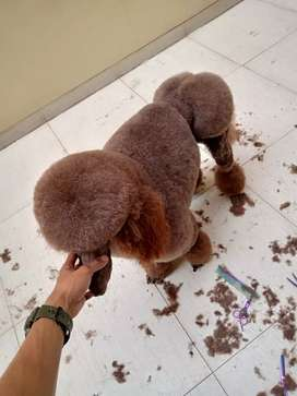 Termurah jasa grooming salon anjing kucing panggilan mandi groomer