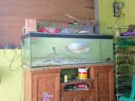 Aquarium Besar dan Peralatannya