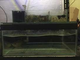 Aquarium 50x40x25