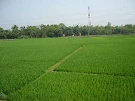 Commercial and agriculture land in katlang