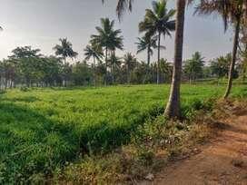 14 acres agriculture land next to river@ Kanakapura