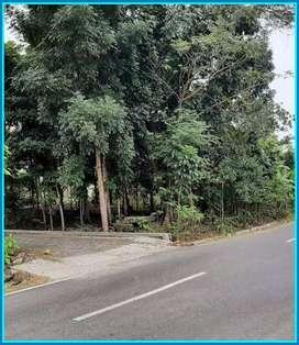 Tanah Dijual Sleman 50 Meter dari Jalan Raya SHM Pekarangan