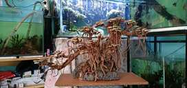 Bonsai untuk aquarium