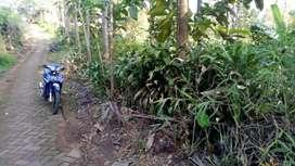 Jual rumah kebun di Wisata Sumber Biru Wonosalam, Jombang