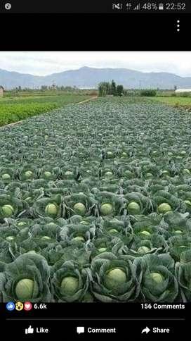 dijual tanah untuk lahan perkebunan/pertanian